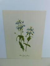 VTG Blue Eyed Mary  (Colinsia Verna)  9x12 Frameable Print Nature Flower - $11.75