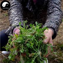 Buy Capsella Bursa-pastoris Herb Vegetables Seeds 600pcs Plant Wild Vege... - $15.99
