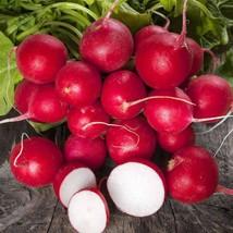 300+ Champion Radish Seeds | Non-GMO Heirloom | Fresh Vegetable Garden Seeds - $3.98