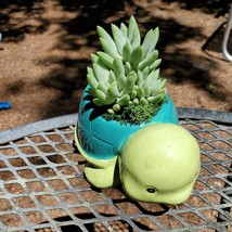 "Turtle Planter & Live Succulent, 5"" Blue Green Ceramic Tortoise Pot, Sedeveria image 7"