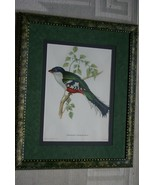 GOULD TROGON BIRD FOLIO LITHOGRAPH UNIQUE SIGNED ARTIST HAND PAINTED FRA... - $189.99