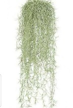 Florida Live Spanish moss Air plant  Tillandsia in excellent condition G... - $21.68