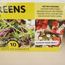 Fox Planter with Microgreens Seed Kit, gardening gift, ceramic animal planter image 10