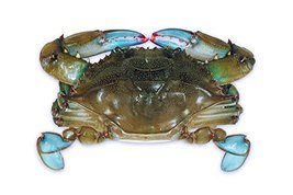 Raw Domestic Soft Shell Crabs (12 Ct. Primes) - Frozen - $97.02