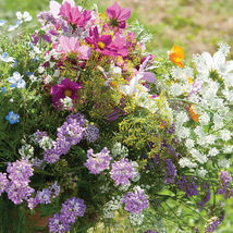 Beneficial Insect Attractant Mix / Beneficial Insect Flower Seeds - $17.00