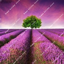 100 Pcs Purple Red French Lavender Seed Wedding Decoration Living Herb G... - $2.16