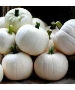 10 Pcs Cotton Candy Pumpkin Seeds #MNHG - £11.99 GBP