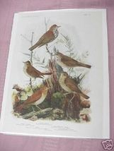 """1917 Color Illustrated 8""""x11"""" Thrush & Veery Bird Page - $7.99"""