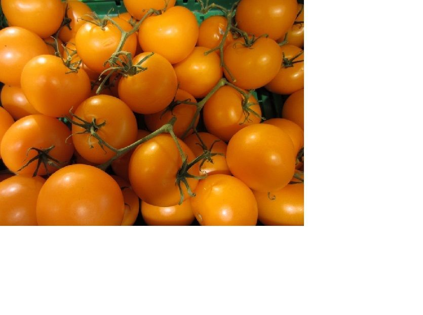 SHIPPED From US,PREMIUM SEED:25 Particles of Golden Jubliee Tomato,Hand-Packaged
