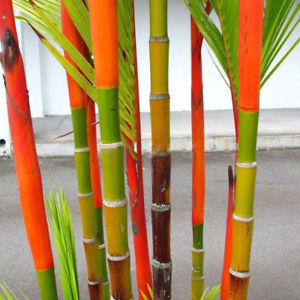 100Pcs Phyllostachys Pubescens Moso Bamboo Seeds Planting Perennial Home Decor