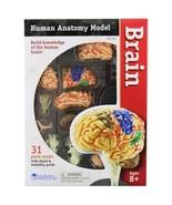 Learning Resources Human Anatomy Brain Model  - $48.00
