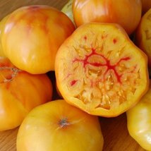 1000 Seeds of Gold Medal - Tomatoes Bi-Color - $48.02