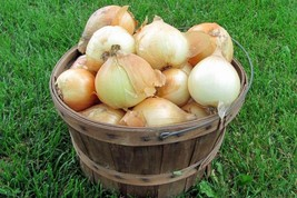 Onion Seeds - Walla Walla (OR) - Outdoor Living - Vegetable Seeds - Free Shippng - $36.99+