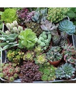 "Twenty (20) 4""inch Beautiful potted Succulents Collection all assorted s... - $49.79"