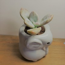 """Elephant Pot with Succulent, Live Plant in Grey Ceramic Planter 2"""" image 6"""