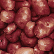 Red Potatoes Vegetables Food Farmer's Market Cotton Fabric Print BTY D77... - $11.49