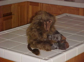 """16"""" Folkmanis Baboon Hand Puppet Plush Toy With Tags Retired and Rare - $59.39"""