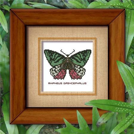 8997 butterfly 805