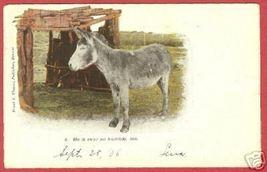 1906 Postcard Burro Donkey Thayer UDB BJs - $5.00