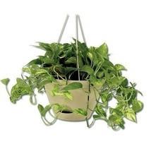 Hanging Planter Pot Shelf Watering Flower Basket Outdoor Home Indoor Gar... - $61.93 CAD