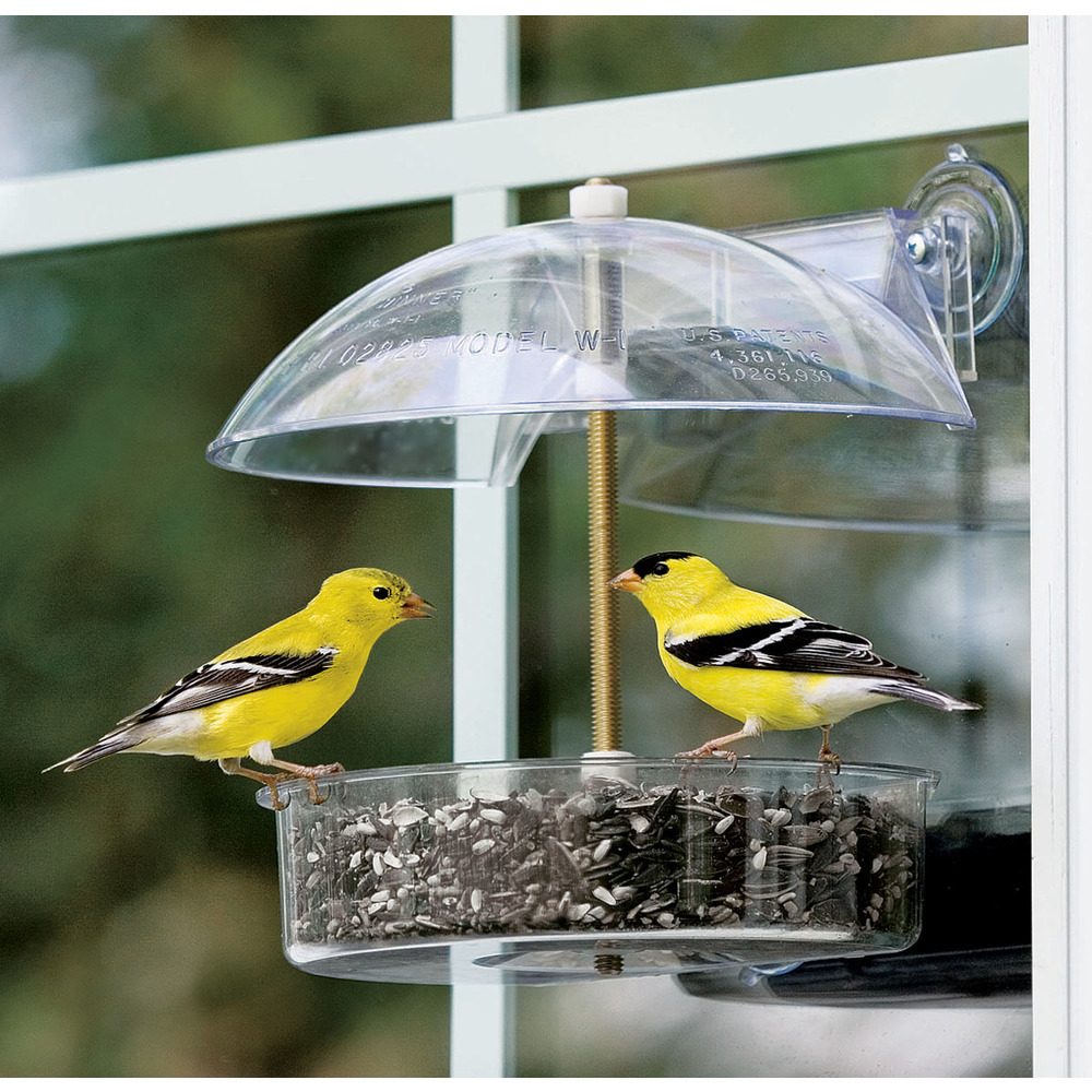 Primary image for Droll Yankees Clear The Winner Multi-purpose Window Feeder 1/2 Lb Capacity 02196