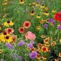 Flowers - Wildflowers - Midwestern Mix - Non-Hybrid - St. Clare Heirloom Seeds - $1.99