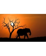 African Safari Elephant Sunset Home Decor Canvas Print. Framed or Unframed - $5.52+