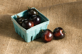 BEST PRICE 10 Seeds Tomato Indigo Rose Organic Fruit,DIY Fruit Seeds BD2... - $8.99
