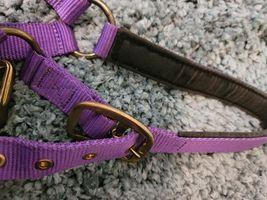 Action Company Yearling Nylon Padded Halter Purple image 5