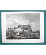 COWS Cattle of Queen ELizabeth Alderney Areed - SUPERB 1850s Antique Print - $22.95