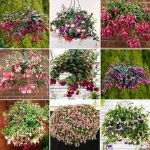 35PCS Hanging Bonsai Fuchsia Perennial Flowers Seeds Home and Garden - $13.58