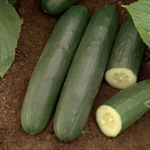 SHIP From US, 50 Seeds Darlington Cucumber Seeds, DIY Healthy Vegetable AM - $36.99