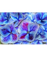 Hydrangea Beautiful Flower Home Decor Canvas Print, choose your size. - $5.82+