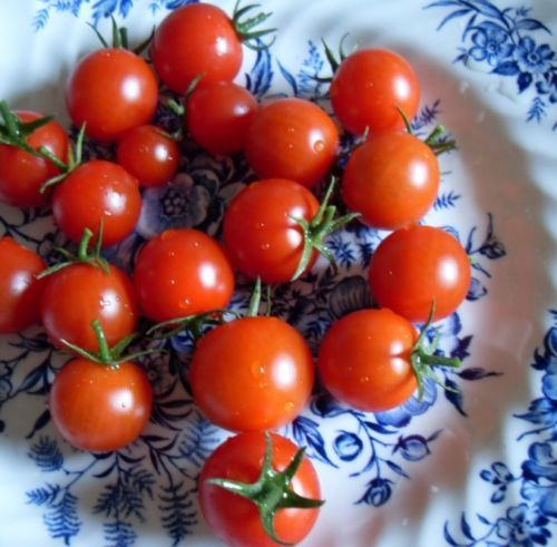 SHIPPED From US,PREMIUM SEED: 50 Particles of Red Cherry Tomato, Hand-Packaged