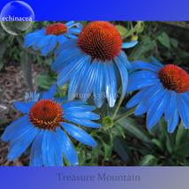 E echinacea purpurea 100 seeds big blooms blue petals w orange heart hybrid.jpg 640x640 thumb200