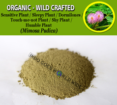 POWDER Sensitive Plant Dormilones Humble Shy Plant Sleepy Plant Mimosa P... - $7.85+