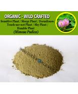 POWDER Sensitive Plant Dormilones Humble Shy Plant Sleepy Plant Mimosa P... - $16.40+