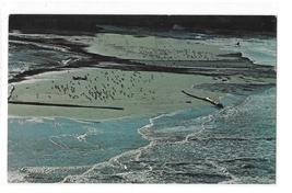 California Mendocino Coast Flood Tide Entering Big River Vintage 70s Pos... - $6.99