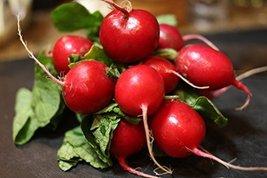 50 Seeds of Rudolf Radishes - $16.83