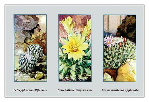 Pelecyphora Aselliformis - Art Print - $19.99 - $179.99