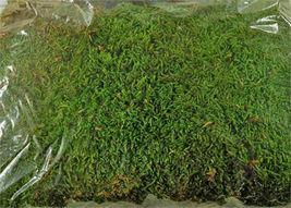 8 OZ - Preserved Sheet Moss - $25.80