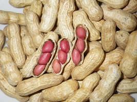 Carwile's Virginia Peanut Seeds 5-8 Peanuts 8gm Open-Pollinated Heirloom... - $22.99