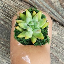 """Walrus Planter with Succulent, Live Plant in Ceramic Animal Pot, 5"""" image 3"""