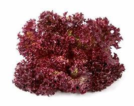 Sow No GMO Lettuce Ruby Red Leafy Salad Veggie Non GMO Heirloom Garden V... - $2.45