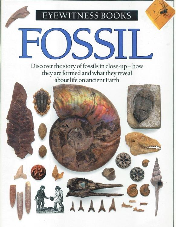 Eyewitness book fossil