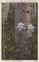 Colorado Columbines Dainty State Flower Foot of Aspen CO Postcard B16 - $2.69