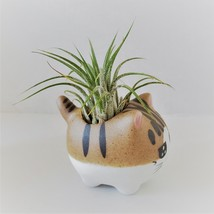 """Air Plant in Cat Planter 3"""", Kitty Ceramic Pot with Emotion Face image 6"""