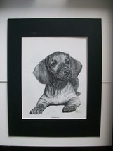 Dachshund Dog Print Puppy Gladys Emerson Cook Bookplate 1962 11x14 Matte... - $24.74