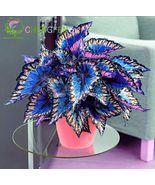 100Seeds Japanese Bonsai Coleus Foliage Plants Perfect Color Rainbow Dragon - $7.99