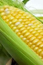 Corn, BI-Color, Butter N Sugar, Heirloom, 50 Seeds, A Bicolor Delight - $5.99